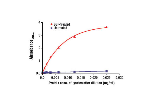 Figure 2. The relationship between protein concentration of lysates from untreated and EGF-treated A-431 cells and the absorbance at 450 nm is shown. After starvation, A-431 cells (85% confluence) were treated with hEGF #8916 (100 ng/ml) for 5 min at 37°C and then lysed.