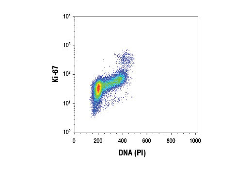 Flow cytometric analysis of Jurkat cells using Ki-67 (D3B5) Rabbit mAb and Propidium Iodide (PI)/RNase Staining Solution #4087. Anti-rabbit IgG (H+L), F(ab')<sub>2</sub> Fragment (Alexa Fluor<sup>®</sup> 488 Conjugate) #4412 was used as a secondary antibody.