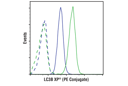 Flow cytometric analysis of ACHN cells, untreated (blue) or treated with Chloroquine #14774 (50 μM, 16 hr; green), using LC3B (D11) XP<sup>® </sup>Rabbit mAb (PE Conjugate) (solid lines) or concentration-matched Rabbit (DA1E) mAb IgG XP<sup>®</sup> Isotype Control (PE Conjugate) #5742 (dashed line).