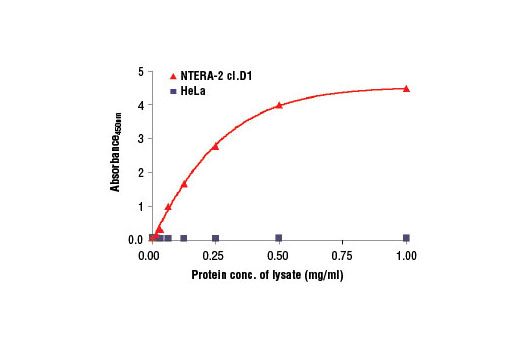 Figure 2. The relationship between the protein concentration of lysates from HeLa and NTERA-2 cl.D1 cells and the absorbance at 450 nm is shown. Cells were lysed at 90% confluency.