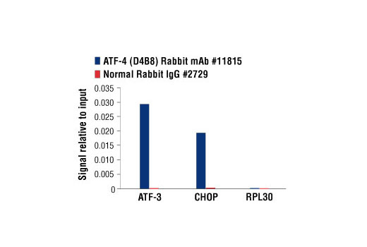 Chromatin immunoprecipitations were performed with cross-linked chromatin from mouse embryonic fibroblasts treated with tunicamycin (2ug/ml) overnight, and ATF-4 (D4B8) Rabbit mAb or Normal Rabbit IgG #2729 using SimpleChIP<sup>®</sup> Enzymatic Chromatin IP Kit (Magnetic Beads) #9003. The enriched DNA was quantified by real-time PCR using SimpleChIP<sup>®</sup> Mouse ATF-3 Intron 1 Primers #13059, mouse CHOP promoter primers, and SimpleChIP<sup>®</sup> Mouse RPL30 Intron 2 Primers #7015. The amount of immunoprecipitated DNA in each sample is represented as signal relative to the total amount of input chromatin, which is equivalent to one.
