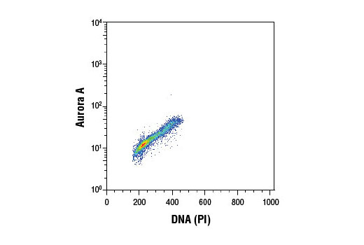 Flow cytometric analysis of Jurkat cells using Aurora A (1F8) Mouse mAb and propidium iodide (DNA content). Anti-mouse IgG (H+L), F(ab')<sub>2</sub> Fragment (Alexa Fluor<sup>®</sup> 488 Conjugate) #4408 was used as a secondary antibody.