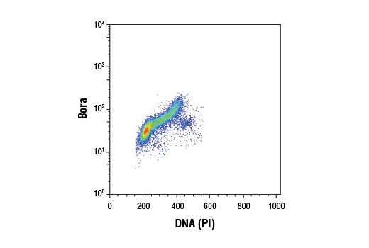 Monoclonal Antibody Flow Cytometry Regulation of Protein Localization