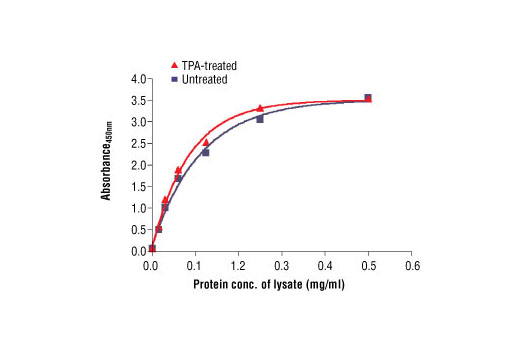 Figure 2. The relationship between the protein concentration of untreated and TPA-treated OVCAR8 cell lysates and the absorbance at 450 nm is shown. Cells were serum starved overnight and then treated with 200 nm TPA for 30 min. at 37ºC.