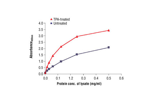 Figure 2. The relationship between the protein concentration of lysates from untreated and TPA-treated OVCAR8 cells and the absorbance at 450 nm is shown. Cells were serum starved overnight and then treated with 200 nm TPA for 30 min. at 37ºC.