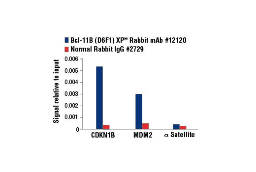 Chromatin Immunoprecipitation Image 2: Bcl-11B (D6F1) XP® Rabbit mAb