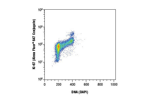 Flow cytometric analysis of Jurkat cells using Ki-67 (D3B5) Rabbit mAb (Alexa Fluor<sup>®</sup> 647 Conjugate) and DAPI #4083 (DNA content).