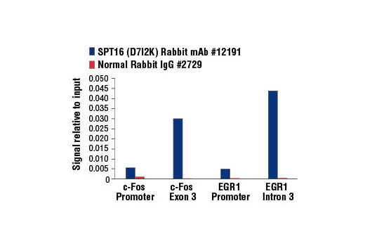 Chromatin immunoprecipitations were performed with cross-linked chromatin from HCT 116 cells starved for 48 hr then serum stimulated with 20% FBS for 15 min and either SPT16 (D7I2K) Rabbit mAb or Normal Rabbit IgG #2729 using SimpleChIP<sup>®</sup> Enzymatic Chromatin IP Kit (Magnetic Beads) #9003. The enriched DNA was quantified by real-time PCR using SimpleChIP<sup>®</sup> Human c-Fos Promoter Primers #4663, SimpleChIP<sup>®</sup> Human c-Fos Exon 3 Primers #12010, SimpleChIP<sup>®</sup> Human EGR1 Promoter Primers #5549, and SimpleChIP<sup>®</sup> Human EGR1 Intron 3 Primers #11953. The amount of immunoprecipitated DNA in each sample is represented as signal relative to the total amount of input chromatin, which is equivalent to one.