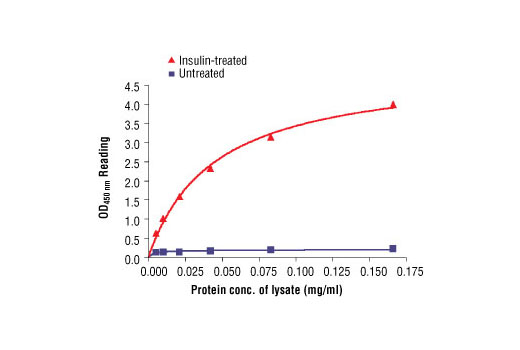 Figure 2: The relationship between protein concentration of lysates from untreated and insulin-treated CHO-IR/IRS-1 cells and kit assay optical density readings is shown. After starvation, CHO-IR/IRS-1 cells (85% confluence) were treated with insulin (100 nM) for 2 min at 37°C, and then lysed.