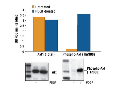 ELISA Kit Positive Regulation of Fat Cell Differentiation