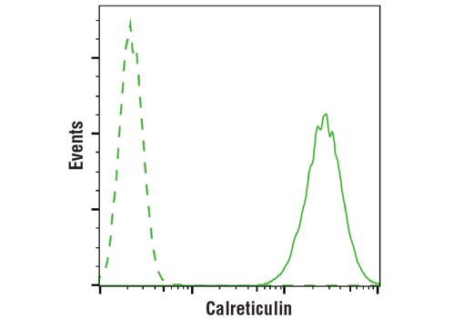 Flow cytometric analysis of Jurkat cells using Calreticulin (D3E6) XP<sup>®</sup> Rabbit mAb (solid line) compared to concentration-matched Rabbit (DA1E) mAb IgG XP<sup>® </sup>Isotype Control #3900 (dashed line). Anti-rabbit IgG (H+L), F(ab')2 Fragment (Alexa Fluor<sup>®</sup> 488 Conjugate) #4412 was used as a secondary antibody.