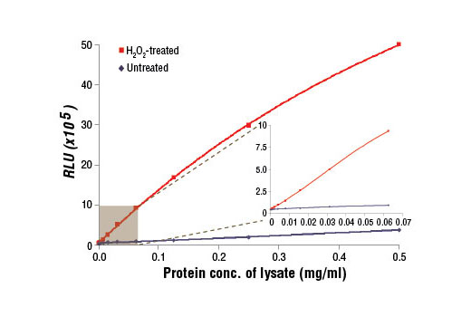 Figure 1. Relationship between protein concentration of lysates from untreated and H<sub>2</sub>O<sub>2</sub>-treated Hep G2 cells and immediate light generation with chemiluminescent substrate is shown. Hep G2 cells (80-90% confluent) were treated with H<sub>2</sub>O<sub>2 </sub>(10 mM, 10 min) and lysed with PathScan<sup>®</sup> Sandwich ELISA Lysis Buffer (1X) #7018. Graph inset corresponding to the shaded area shows high sensitivity and a linear response at the low protein concentration range.