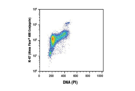 Flow cytometric analysis of Jurkat cells using Ki-67 (D3B5) Rabbit mAb (Alexa Fluor<sup>®</sup> 488 Conjugate) and Propidium Iodide (PI) /RNase Staining Solution #4087 (DNA content).