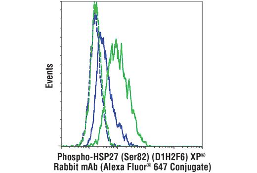 Flow cytometric analysis of Hela cells, untreated (blue) or treated with UV (40mj, 30min recovery; green) using Phospho-HSP27 (Ser82) (D1H2F6) XP® Rabbit mAb (Alexa Fluor® 647 Conjugate) (solid lines) or a concentration-matched</p><p>Rabbit (DA1E) mAb IgG XP<sup>®</sup> Isotype Control (Alexa Fluor<sup>®</sup> 647 Conjugate) #2985 (dashed lines).