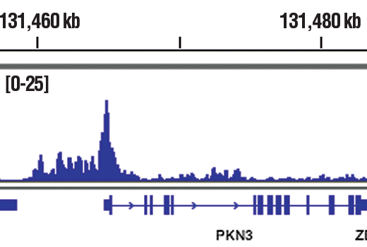 Monoclonal Antibody Chromatin Ip-Seq Helicase Activity