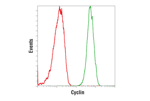 Flow cytometric analysis of Jurkat cells using Cyclin D1 (92G2) Rabbit mAb (PE conjugate) (green) compared to Rabbit (DA1E) mAb IgG XP<sup>®</sup> Isotype Control (PE Conjugate) #5742 (red).