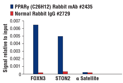 Chromatin immunoprecipitations were performed with cross-linked chromatin from HDLM-2 cells and either PPARγ (C26H12) Rabbit mAb or Normal Rabbit IgG #2729 using SimpleChIP® Plus Enzymatic Chromatin IP Kit (Magnetic Beads) #9005. The enriched DNA was quantified by real-time PCR using SimpleChIP® Human FOXN3 Intron 3 Primers #95568, human STON2 intron 4 primers, and SimpleChIP® Human α Satellite Repeat Primers #4486. The amount of immunoprecipitated DNA in each sample is represented as signal relative to the total amount of input chromatin, which is equivalent to one.