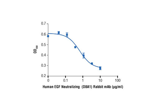 The ability of Human EGF Neutralizing (D8A1) Rabbit mAb to inhibit hEGF-induced MCF 10A cell proliferation was assessed. MCF 10A cells were treated with increasing concentrations of antibody in the presence of hEGF #8916 (2 ng/ml). After 24 hr, cells were labeled with BrdU for 4 hr and BrdU incorporation was determined using BrdU Cell Proliferation Assay Kit #6813.