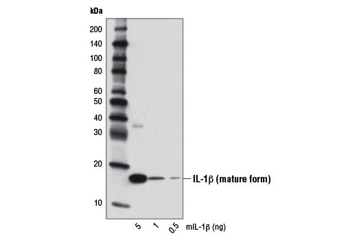 Image 12: Mouse Reactive Pyroptosis Antibody Sampler Kit