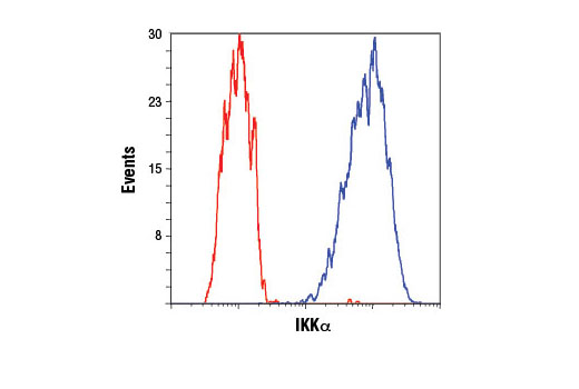 Flow cytometric analysis of HCT 116 cells using IKKα (3G12) Mouse mAb (blue) compared to concentration-matched Mouse (G3A1) mAb IgG1 Isotype Control #5415 (red). Anti-mouse IgG (H+L), F(ab')<sub>2 </sub>Fragment (Alexa Fluor<sup>®</sup> 488 Conjugate) #4408 was used as a secondary antibody.