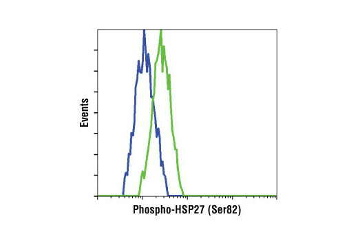 Flow cytometric analysis of HeLa cells, untreated (blue) or UV-treated (green), using Phospho-HSP27 (Ser82) Antibody II.
