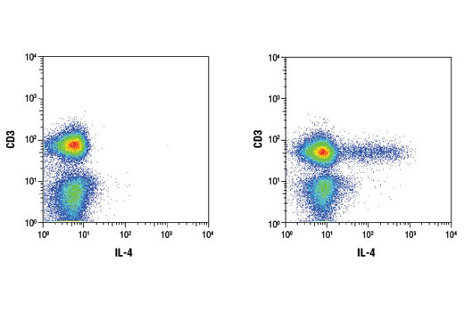 Flow cytometric analysis of human peripheral blood mononuclear cells, untreated (left) or treated (right) with TPA #4174 (40 nM, 6 hr), Ionomycin #9995 (2 μM, 6 hr) and Brefeldin A #9972 (1 μg/ml, last 5 hr of stimulation), using a CD3 antibody and IL-4 (D19A10) Rabbit mAb. Anti-rabbit IgG (H+L), F(ab')<sub>2</sub> Fragment (Alexa Fluor<sup>®</sup> 647 Conjugate) #4414 was used as a secondary antibody. Analysis was performed on cells in the lymphocyte gate.