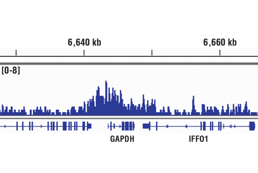 Chromatin IP-seq Image 3