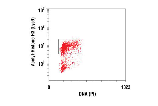 Flow cytometric analysis of untreated HeLa cells using Acetyl-Histone H3 (Lys9) (C5B11) Rabbit mAb #9649 versus propidium iodide (DNA content). Note positive staining in cycling cells (box).