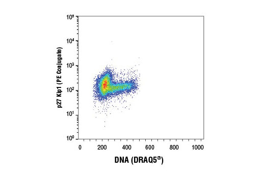 Flow cytometric analysis of Jurkat cells using p27 Kip1 (D69C12) XP<sup>®</sup> Rabbit mAb (PE Conjugate) and DRAQ5<sup>®</sup> #4084 (fluorescent DNA dye).