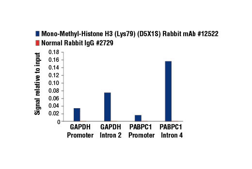 Image 8: Methyl-Histone H3 (Lys79) Antibody Sampler Kit