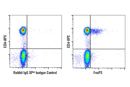 Flow Cytometry - FoxP3 (D6O8C) Rabbit mAb