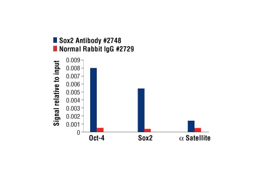 Chromatin immunoprecipitations were performed with cross-linked chromatin from NCCIT cells and either Sox2 Antibody or Normal Rabbit IgG #2729 using SimpleChIP<sup>®</sup> Enzymatic Chromatin IP Kit (Magnetic Beads) #9003. The enriched DNA was quantified by real-time PCR using SimpleChIP<sup>®</sup> Human Oct-4 Promoter Primers #4641, SimpleChIP<sup>®</sup> Human Sox2 Promoter Primers #4649, and SimpleChIP<sup>®</sup> Human α Satellite Repeat Primers #4486. The amount of immunoprecipitated DNA in each sample is represented as signal relative to the total amount of input chromatin, which is equivalent to one.