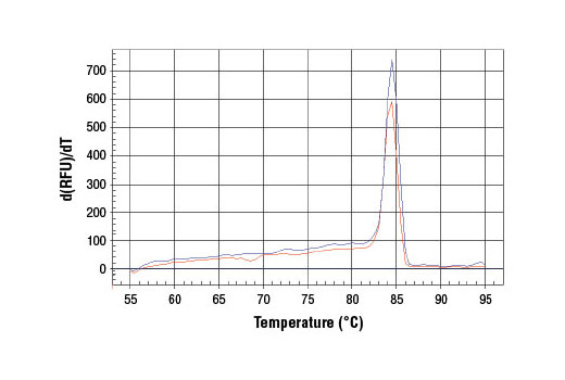 PCR product melting curves were obtained for real-time PCR reactions performed using SimpleChIP<sup>®</sup> Mouse NQO1 Promoter Primers. Data is shown for both duplicate PCR reactions using 20 ng of total DNA. The melt curve consists of 80 melt cycles, starting at 55°C with increments of 0.5°C per cycle. Each peak is formed from the degradation of a single PCR product.