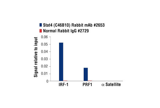 Chromatin immunoprecipitations were performed with cross-linked chromatin from NK-92 cells starved of IL-2 overnight then treated with IL-12 (10 ng/ml) for 4 hr and either Stat4 (C46B10) Rabbit mAb #2653 or Normal Rabbit IgG #2729 using SimpleChIP<sup>®</sup> Enzymatic Chromatin IP Kit (Magnetic Beads) #9003. The enriched DNA was quantified by real-time PCR using human IRF-1 promoter primers, human PRF1 promoter primers, and SimpleChIP<sup>®</sup> Human α Satellite Repeat Primers #4486. The amount of immunoprecipitated DNA in each sample is represented as signal relative to the total amount of input chromatin, which is equivalent to one.
