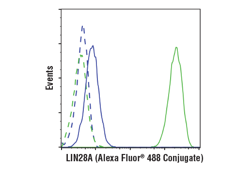 Flow cytometric analysis of HeLa cells (blue) and NTERA2 cells (green) using LIN28A (D1A1A) XP® Rabbit mAb (Alexa Fluor® 488 Conjugate) (solid lines) or a concentration-matched Rabbit (DA1E) mAb IgG XP® Isotype Control (Alexa Fluor® 488 Conjugate) #2975 (dashed lines).