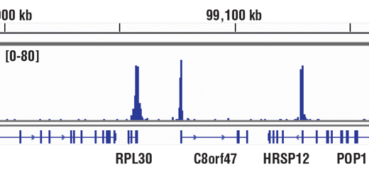 Image 1: Methyl-Histone H3 (Lys4) Antibody Sampler Kit