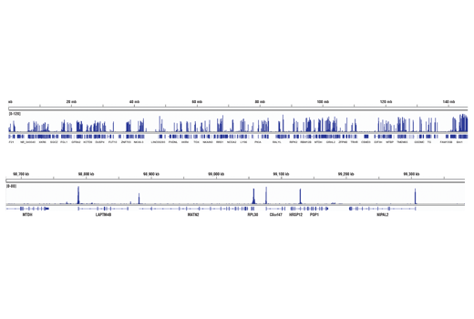 Image 5: Methyl-Histone H3 (Lys4) Antibody Sampler Kit