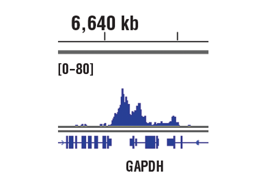 Image 2: Methyl-Histone H3 (Lys4) Antibody Sampler Kit