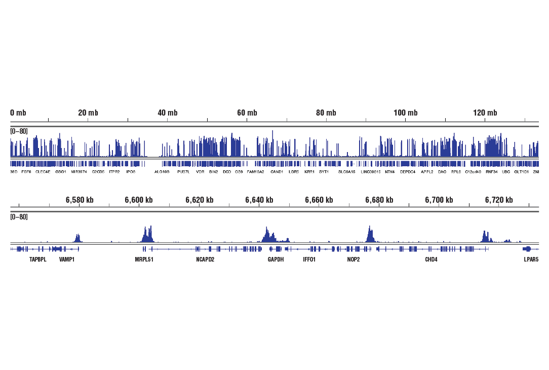Image 6: Methyl-Histone H3 (Lys4) Antibody Sampler Kit