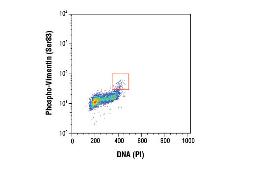 Flow cytometric analysis of untreated Jurkat cells, using Phospho-Vimentin (Ser83) (D5A2D) Rabbit mAb and Propidium Iodide (PI)/RNase Staining Solution #4087 (DNA content). Anti-rabbit IgG (H+L), F(ab')2 Fragment (Alexa Fluor<sup>®</sup> 488 Conjugate) #4412 was used as a secondary antibody.