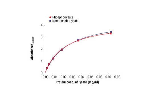 Figure 2: The relationship between protein concentration of phospho- or nonphospho-lysates and the absorbance at 450 nm is shown. Karpas299 cells were harvested at 10<sup>6</sup> cells/ml, and lysed with or without addition of phosphatase inhibitor to the lysis buffer. Cell Line Source: Dr Abraham Karpas at the University of Cambridge.