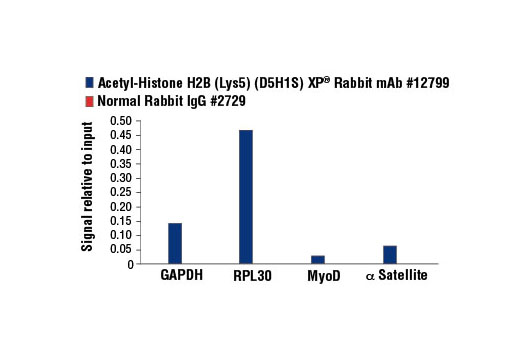 Chromatin Immunoprecipitation Image 1: Acetyl-Histone H2B (Lys5) (D5H1S) XP® Rabbit mAb