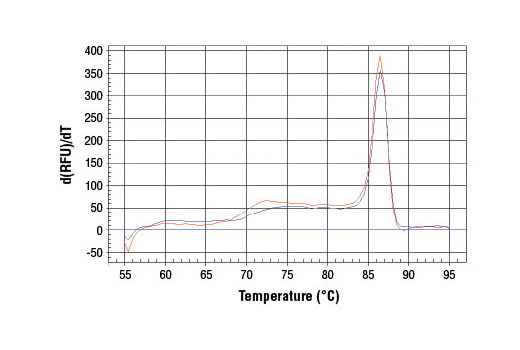 PCR product melting curves were obtained for real-time PCR reactions performed using SimpleChIP<sup>®</sup> Human CCND1 Promoter Primers. Data is shown for both duplicate PCR reactions using 20 ng of total DNA. The melt curve consists of 80 melt cycles, starting at 55°C with increments of 0.5°C per cycle. Each peak is formed from the degradation of a single PCR product.
