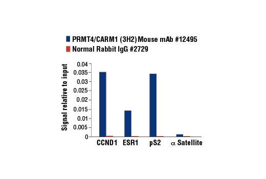 Chromatin immunoprecipitations were performed with cross-linked chromatin from MCF7 cells grown in phenol red free medium and 5% charcoal stripped FBS for 4 d then treated with β-estradiol (10 nM) for 45 minutes and either PRMT4/CARM1 (3H2) or Normal Rabbit IgG #2729 using SimpleChIP<sup>®</sup> Enzymatic Chromatin IP Kit (Magnetic Beads) #9003. The enriched DNA was quantified by real-time PCR using SimpleChIP<sup>®</sup> Human CCND1 Promoter Primers #12531, SimpleChIP<sup>®</sup> Human ESR1 Promoter Primers #9673, SimpleChIP<sup>®</sup> Human pS2 Promoter Primers #9702, and SimpleChIP<sup>®</sup> Human α Satellite Repeat Primers #4486. The amount of immunoprecipitated DNA in each sample is represented as signal relative to the total amount of input chromatin, which is equivalent to one.