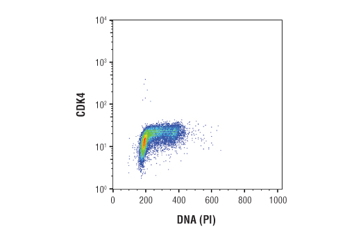 Flow cytometric analysis of Jurkat cells using CDK4 (D9G3E) Rabbit mAb and Propidium Iodid (PI)/RNase Staining Solution #4087 to measure DNA content. Anti-rabbit IgG (H+L), F(ab')2 Fragment (Alexa Fluor® 488 Conjugate) #4412 was used as a secondary antibody.