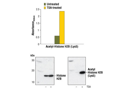 Image 1: PathScan® Acetyl-Histone H2B (Lys5) Sandwich ELISA Kit