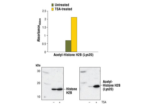 Image 1: PathScan® Acetyl-Histone H2B (Lys20) Sandwich ELISA Kit