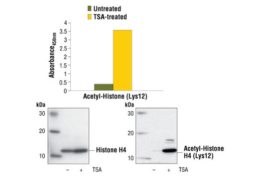 Image 1: PathScan® Acetyl-Histone H4 (Lys12) Sandwich ELISA Kit