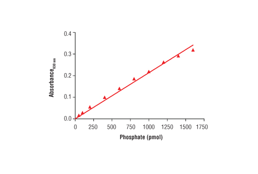 Phosphatase Assay Image 1