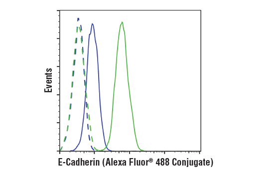 Flow cytometric analysis of Jurkat cells (blue) and MCF-7 cells (green) using E-Cadherin (24E10) Rabbit mAb (Alexa Fluor® 488 Conjugate) (solid lines) or a concentration-matched Rabbit (DA1E) mAb IgG XP<sup>®</sup> Isotype Control (Alexa Fluor<sup>®</sup> 488 Conjugate) #2975 (dashed lines).